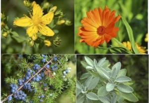 erbe - La terra di Mezzo -Formazione Massaggi Aosta